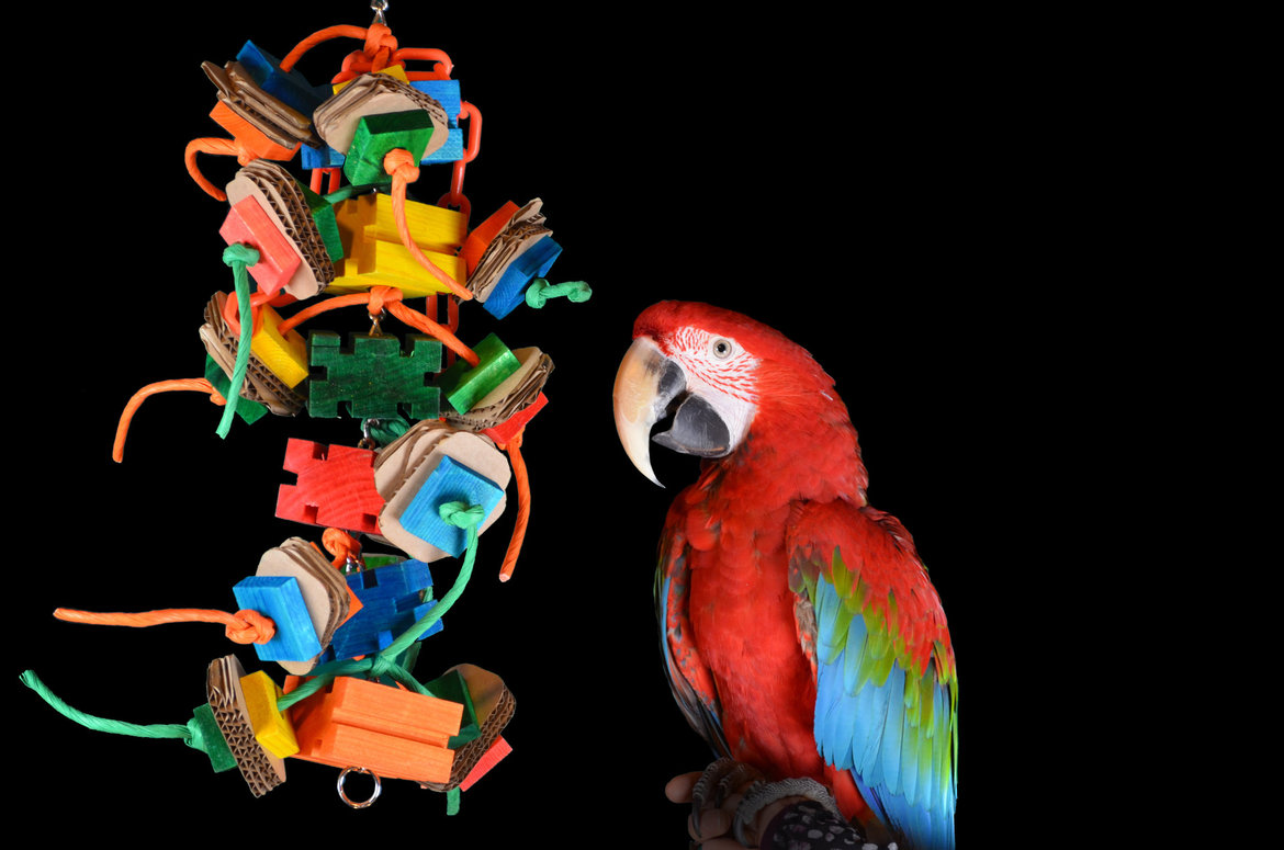 Toys-for-your-parrot