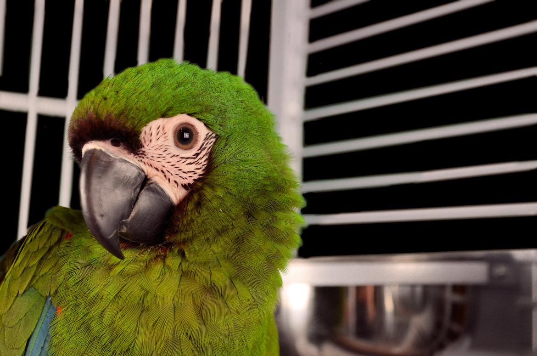 Parrot-cages