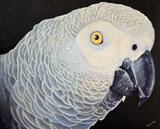 African Grey Oil Painting_