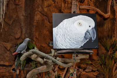 African Grey Oil Painting