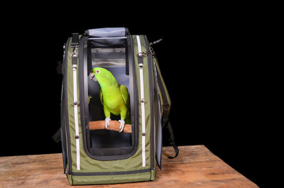 Celltei papegaaien rugtas van pak-o-bird 1